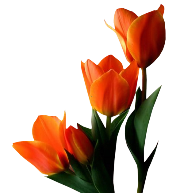 اهديني زهرة للذكرى