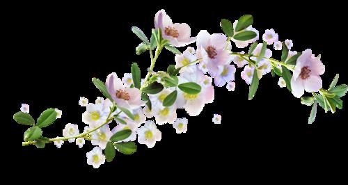 Картинки цветов для фона